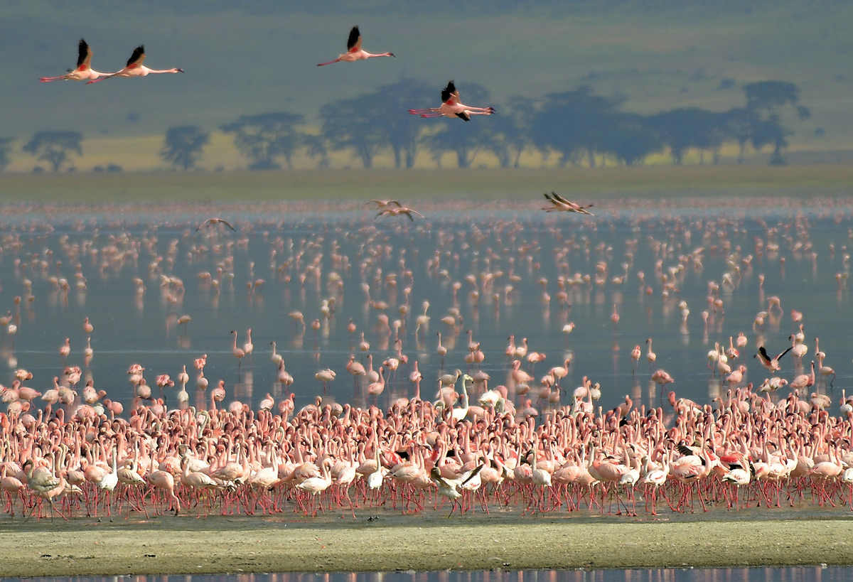 Flamingos in Ngorongoro Conservation Area, Tanzania © Vittorio Ricci