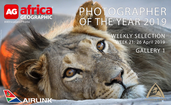 Photographer of the Year Weekly Selection Gallery 1