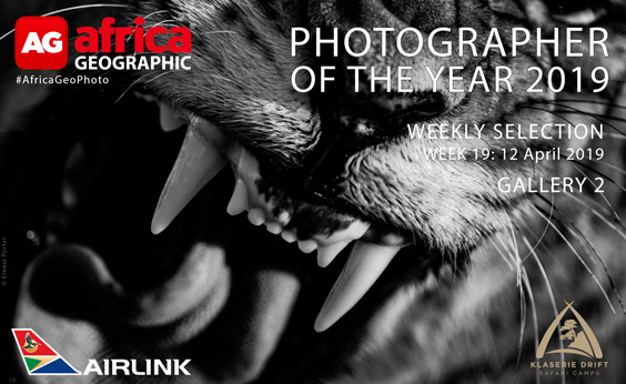 Photographer of the Year 2019 Weekly Selection Gallery 2