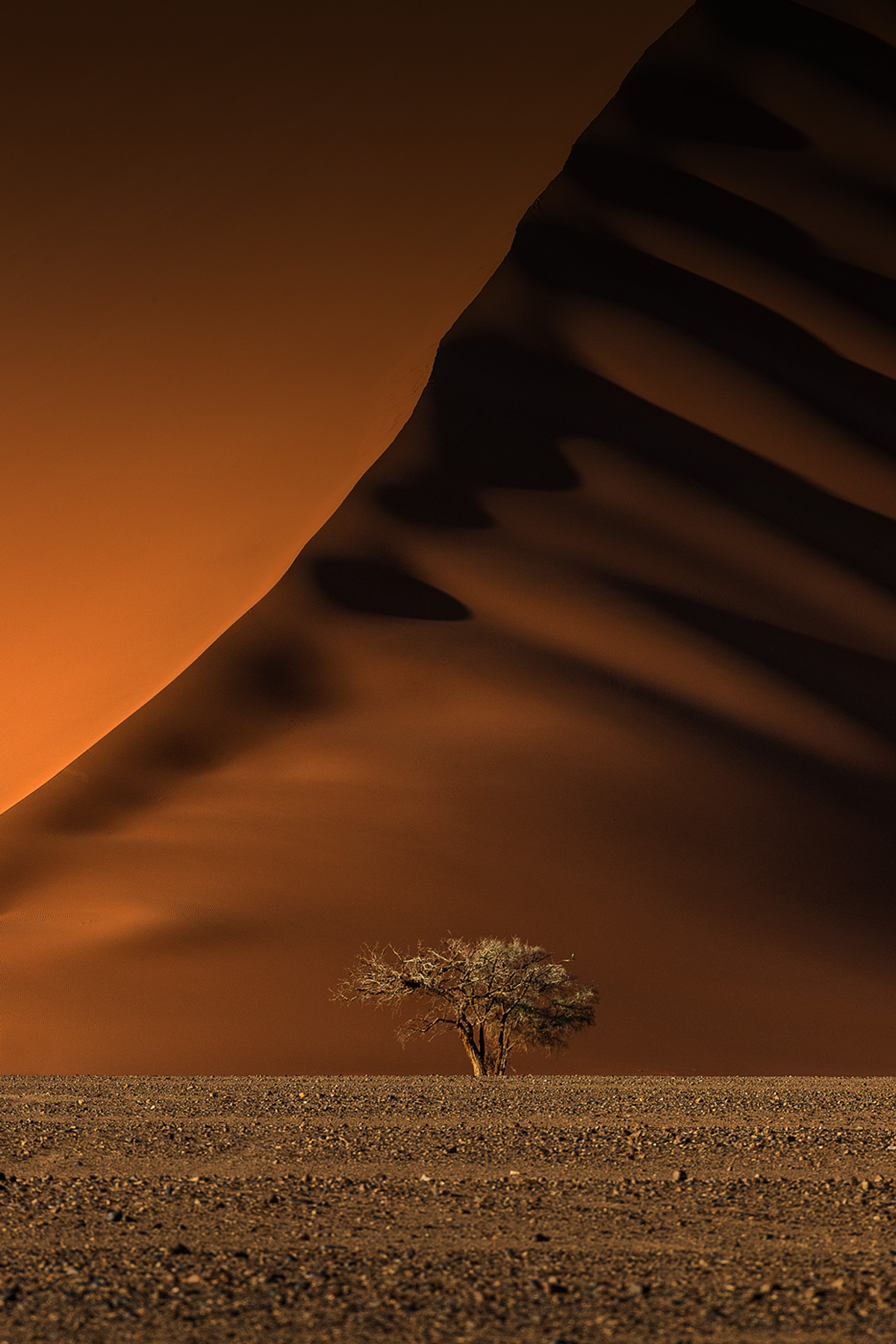 """Lone camelthorn"" – a lone camelthorn tree stands proudly in front of a massive red dune in the Tsauchab Valley, Namib-Naukluft Park, Namibia © Xenia Ivanoff-Erb"