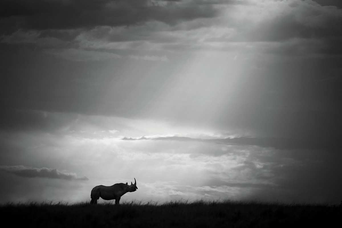 """A sun pillar breaks through the clouds from above and almost points at the rhino as the chosen one."" – Maasai Mara National Reserve, Kenya © Björn Persson"