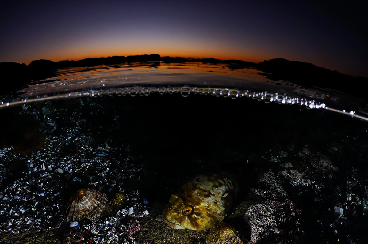 """""""As I ventured out to explore this tidal pool, I never would have guessed that I would find a rocksucker fish (Chorisochismus dentex) hunting as a subject for a split level photograph."""" – West Coast, South Africa © Geo Cloete"""