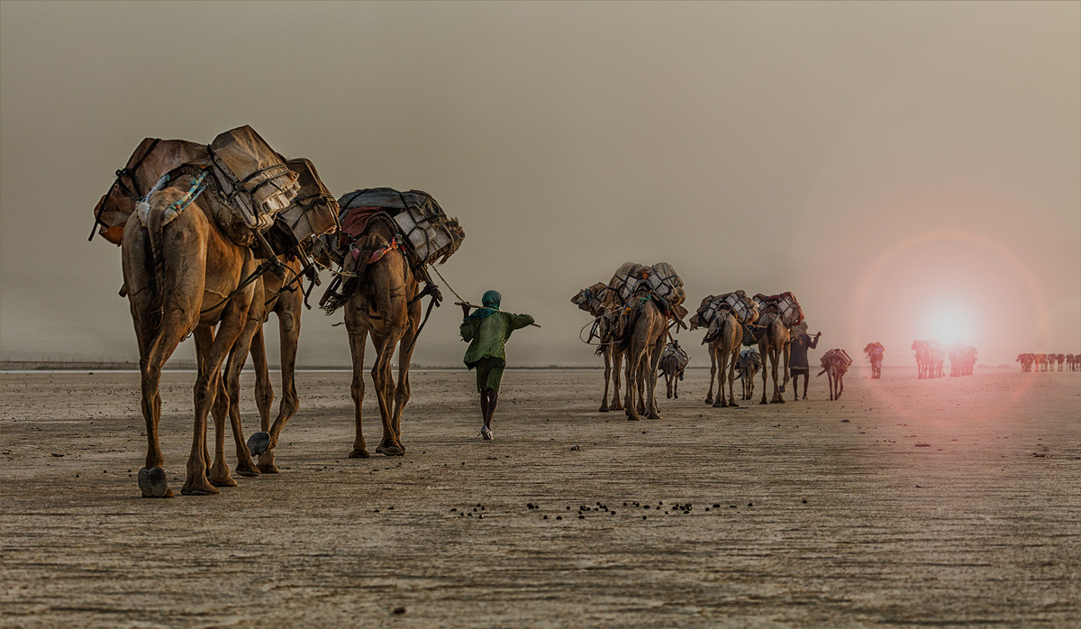 Salt caravans begin their westward journey after sunset in the Afar Depression, Ethiopia © Hesté de Beer