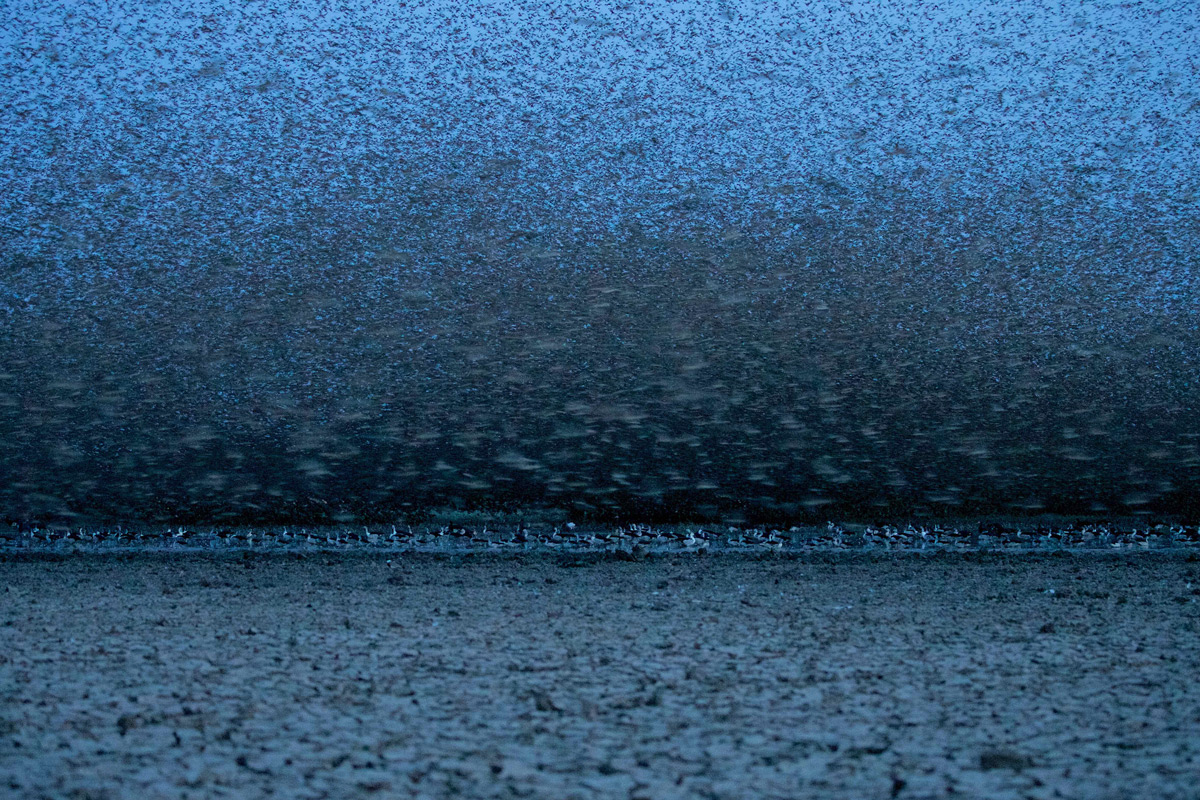 """Pre-dawn with red-billed queleas"" in Zakouma National Park, Chad © Michael Lorentz"