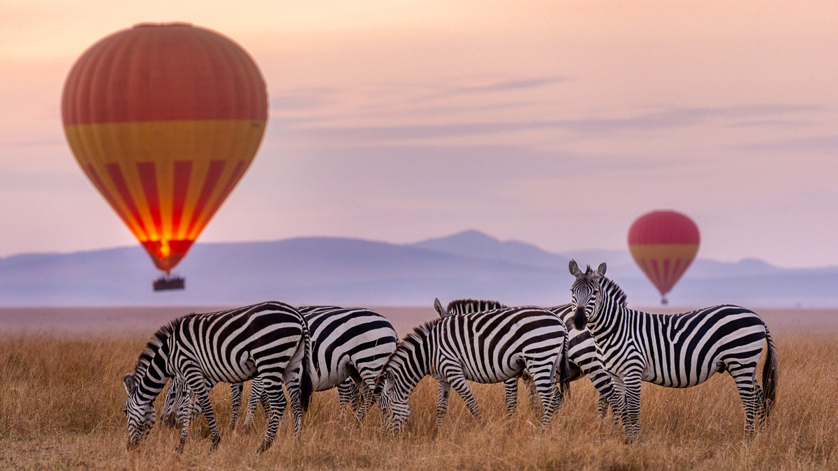 A herd of zebra are framed by hot air balloons in Maasai Mara National Reserve, Kenya © Preeti & Prashant Chacko