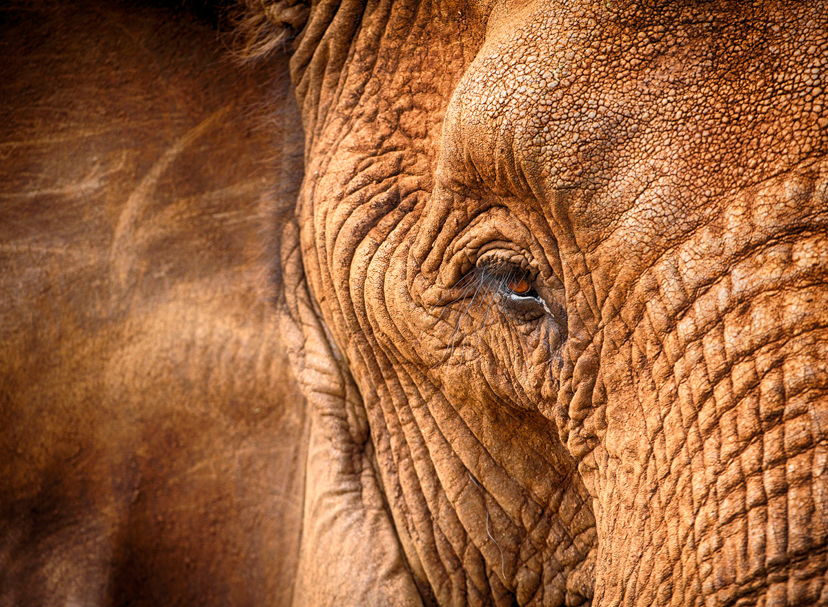 'The soul of an elephant' – Zimanga Private Game Reserve, South Africa © Prelena Soma Owen