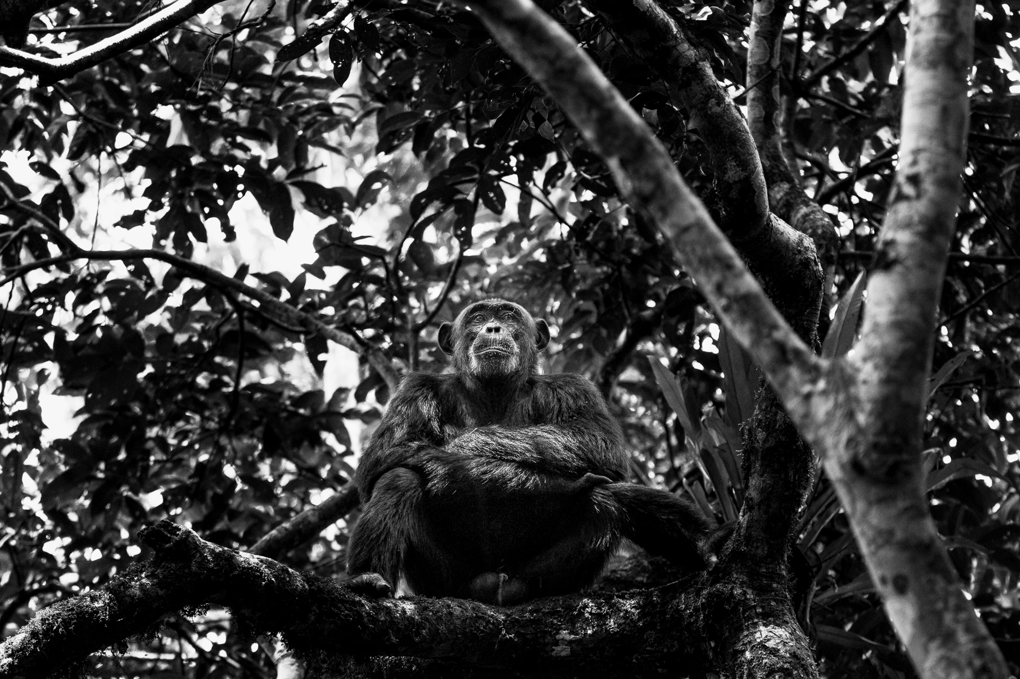 Quiet contemplation in Kibale National Park, Uganda © Patrice Quillard