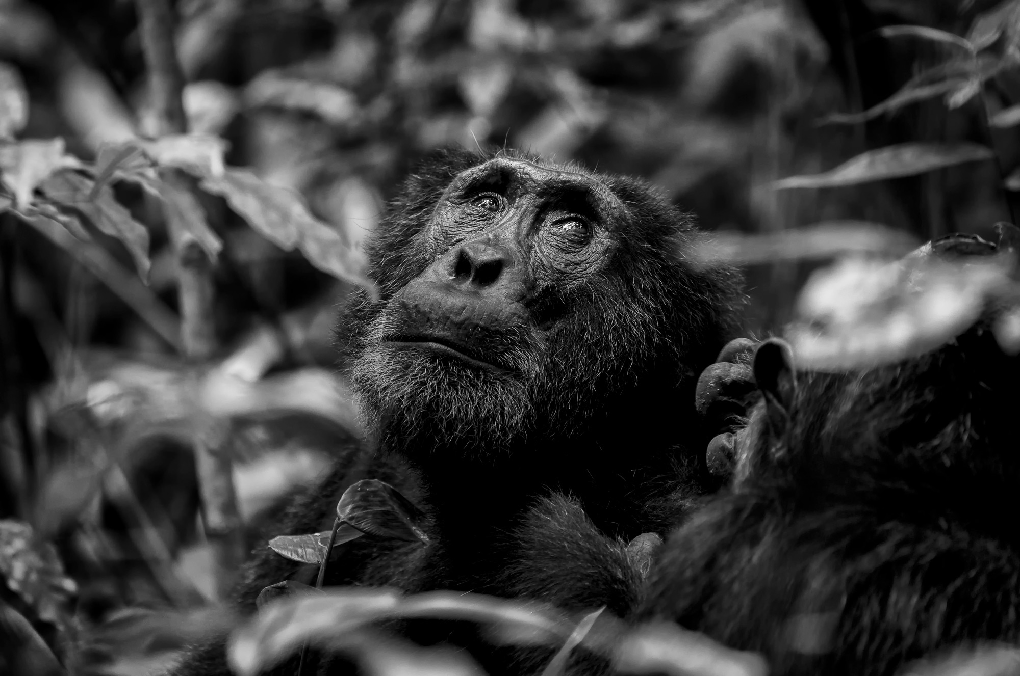 """The wise one"" in Kibale National Park, Uganda © Prelena Soma Owen (Photographer of the Year 2018 Finalist)"