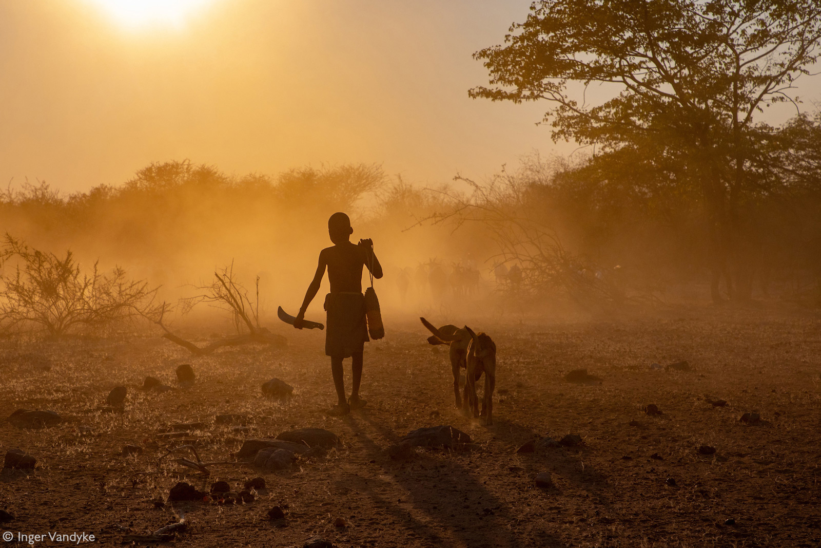 A young Mucubal boy herds his goats into the dust at sunrise. Southern Angola © Inger Vandyke